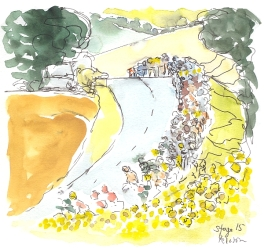 Peloton comes over the hill to a field of sunflowers,