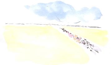Big fields, big sky