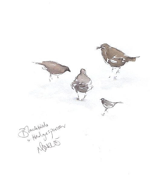 Blackbird sisters and hedgesparrow