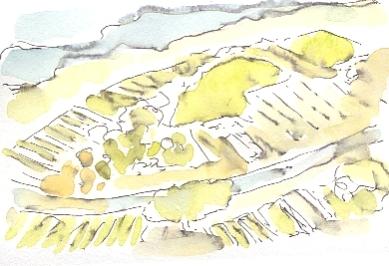 Patchwork vineyards