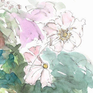 Anemone - pretty in pink - detail