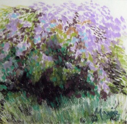 Wisteria magic, Maxine Dodd