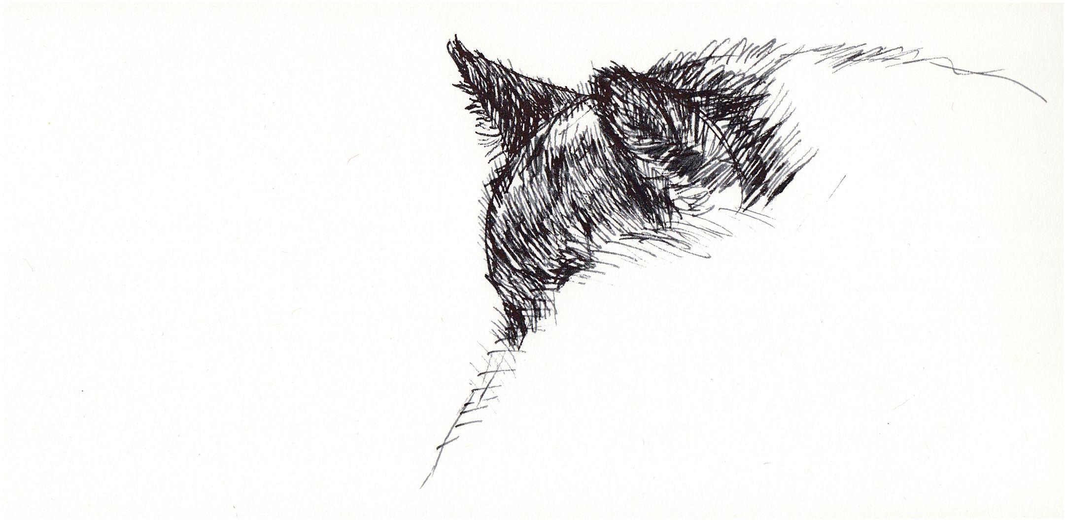 Cat art, Sunday snooze