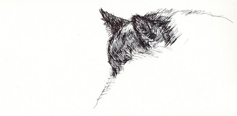 Cat art, Sunday snooze