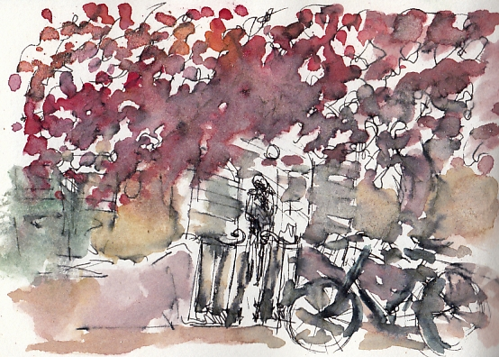 Little bike under the bougainvillea