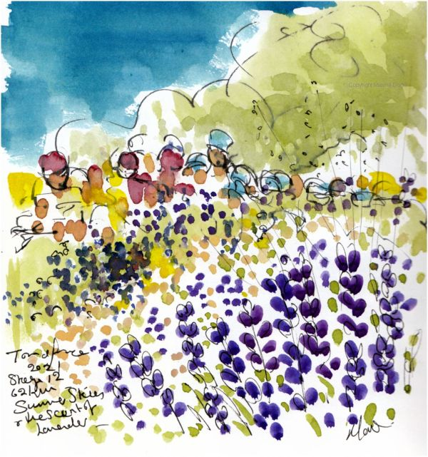 Tour de France 2021 - Stage12, Summer skies and the scent of lavender, original watercolour painting Maxine Dodd